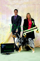 Junior Kennel Club of Victoria 2012