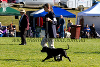 Bairnsdale Kennel Club