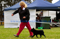 Mount Gambier Shows Oct 2012