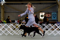 Sporting Terrier Club of Victoria Monday Show