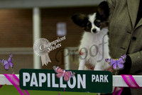 Papillon Club of Victoria