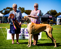 Great Dane Club of Vic