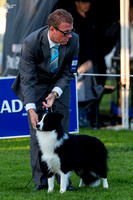 3rd Border Collie National - Day 3 Conformation