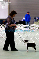 Non Sporting Dog Club of Vic 2012 Shows
