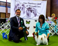 Papillon club of Vic