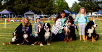Bernese Mountain Dog Club of Victoria - Nov 2017