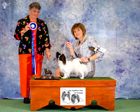 Papillon Club of Victoria - May Champ show