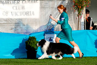 3rd Border Collie National - Day 2 Conformation