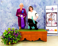 Poodle National - Podium Photos